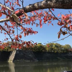 大阪城公園紅葉2019・バリアフリーを探すお出かけ