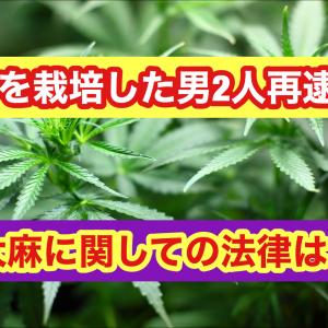 柳田悠汰と岡見優成を大麻取締法違反で再逮捕!顔写真は?現場は?