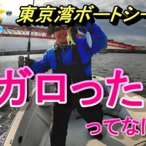 東京湾ボートシーバス・メガロった~