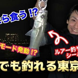 【釣り】初釣りで爆釣モード突入!?【シーバス】