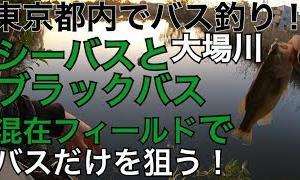 シーバスが多い川でラージを釣り分ける!ラージ連発ゲット! 汽水域の川での釣り分け 関東 東京 都内 埼玉 バス釣り