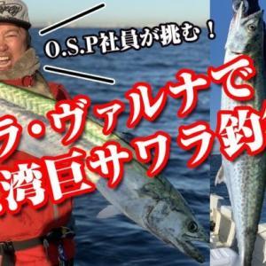 ヴァルナ&ルドラで巨サワラ・シーバス・イナダ捕獲!! in東京湾