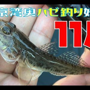 東京湾奥で釣り!いつまで釣れるのかデータ記録中!
