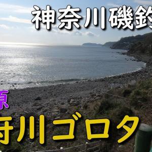 神奈川磯釣り場 根府川ゴロタ 小田原