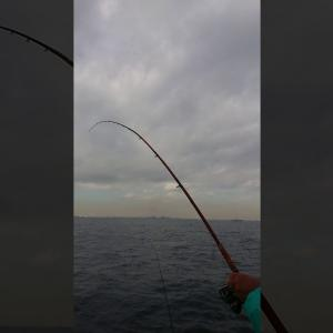 東京湾シロギス 4束釣った日の途中経過