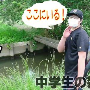 茨城県の川で【雷魚】を釣ってみた!そして捌いて食べる!ルアーと餌で釣る。