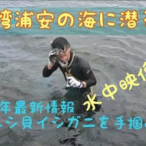 東京湾奥浦安の海に潜るアカニシ貝イシガニ2020年最新情報だ‼️
