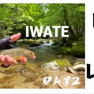 【4k】渓流釣り!ルアーvsフライ 岩手渓流釣り遠征【2日目】part1    岩魚(イワナ)が躍り狂う