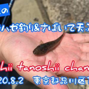 初めての 運河でハゼ釣り&さばいて天ぷらの巻 2020.8.2 東京都品川区某所
