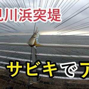 【2020年9月13日】検見川浜突堤 サビキでアジ【サビキ釣り】