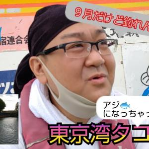 東京湾でタコ釣り🐙の予定がアジ釣りに‥