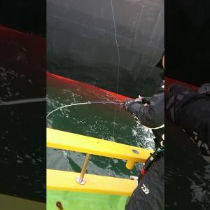 釣り動画!じんすぱチャンネル。東京湾シーバスジギング入れ食い!