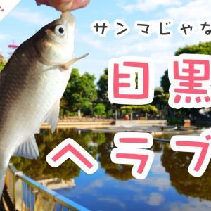 【公園deヘラブナ釣り】清水池公園(東京都目黒区)大都会目黒でヘラブナ釣り!?
