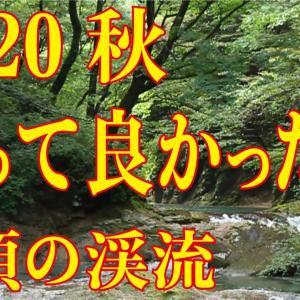 【2020行って良かった選】秋編集1 栃木・木の俣川 #渓流釣り  #那須高原 #川のせせらぎ# River  Healing  Channel
