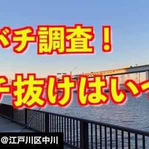 【江戸川区中川で釣り】シーバスが荒喰いする底バチ/バチ抜けは始まってるのか?《2021年1月9日》