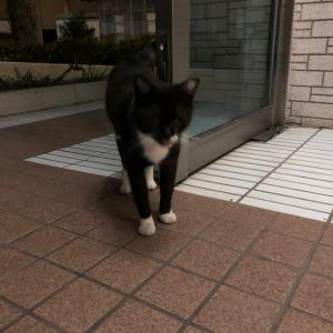 元ノラ猫「ブラッキー」は、幸せ太り♡
