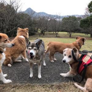 """""""干尽物語 乗車拒否する犬、しない犬"""""""