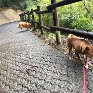 干尽物語 初めて、雨の日、お散歩