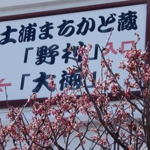 亀城公園の梅