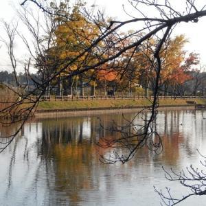 秋の乙戸沼公園