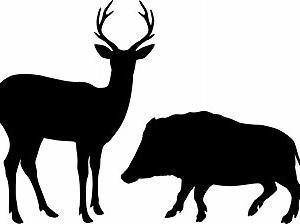 狩猟 免許