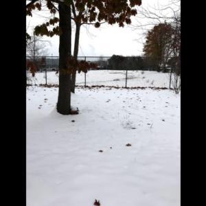豪雪地帯どうするランニング?ミシガン初冬すでに豪雪(How do you spend Winter season running on snowing area?)