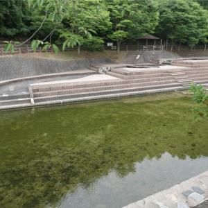 仲島水辺公園(糟屋郡)で川遊び。自然の川と河川プールが両方楽しめる