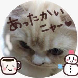【簡単おすすめ!】美容と健康にいい『はちみつ入りミルクコーヒー 』の作り方♪