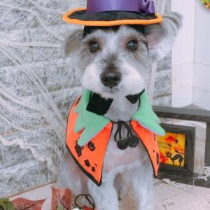【犬との暮らし】わんちゃんのボディチェック!耳血腫再発!?