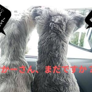 【犬との暮らし】ドッグフードにこだわります。選ぶのは国産?それとも外国産?
