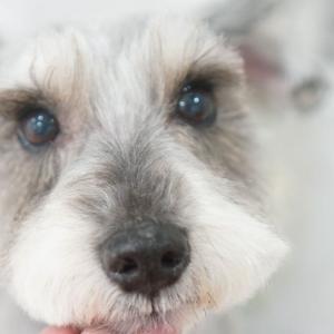 【犬との暮らし】獣医師にお墨付きを貰えたアスリート体型はドッグフード選びも関係ある?