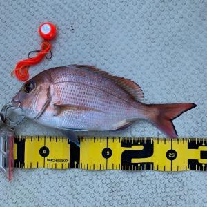 2019 12/9 大津島で釣り