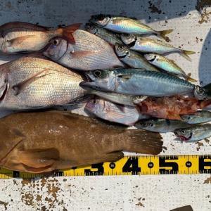 2021 6/9 野島で釣り