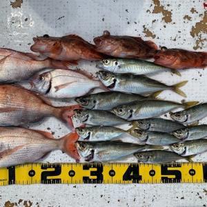 2021 6/14野島で釣り
