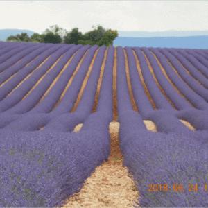 【エア旅行】ラベンダー畑のヴァランソル高原とナポレオン街道をゆく