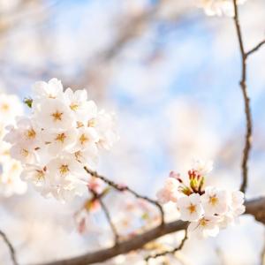 専業主婦の花咲く育児 頑張る木には必ず花が咲く BLOG 祝 読者登録数100人