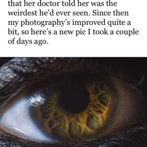 ちょっと変わった目と ちょっと変わった見方