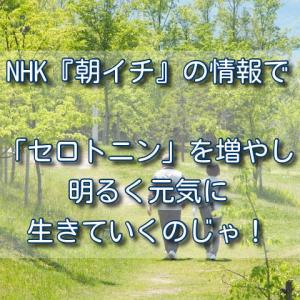 NHK『朝イチ』の情報で「セロトニン」を増やし明るく元気に生きていくのじゃ!