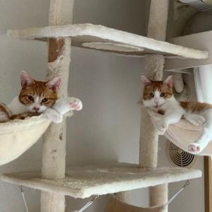シンバとナラちゃんと新たな保護子猫