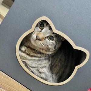 蒼空(一郎)と仔猫