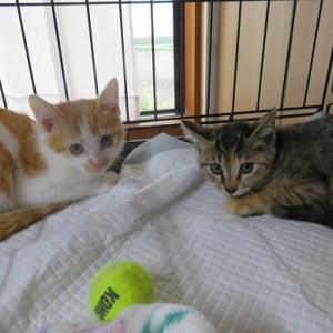 2匹の保護猫が増えました