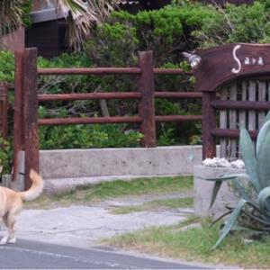種子島 サーフトリップなら 海辺の宿 Sara    中種子町