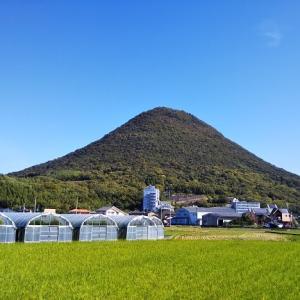 飯野山登山 猫に出会る讃岐富士 丸亀市と坂出市