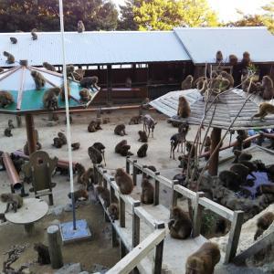野生ザルの王国 淡路島モンキーセンター かわいい野生ザルに出会えます