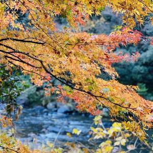 宇甘渓 秋のもみじの紅葉がとてもきれい 吉備中央町