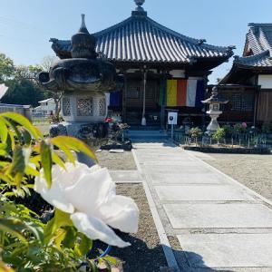 薬王寺と牡丹の花 通称ぼたん寺ときれいな花手水 三豊市