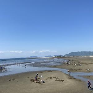 一の宮海岸や海水浴場でマテ貝掘りの潮干狩り 観音寺市
