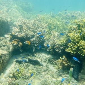 竹ヶ島海中公園のシュノーケリング 熱帯魚やサンゴを鑑賞 海陽町