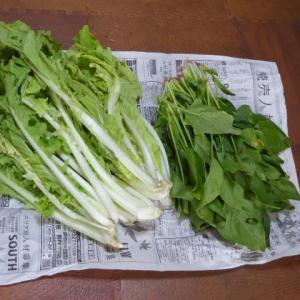 お野菜どっさり頂きました(*^O^*)