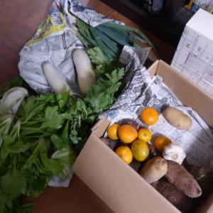 またお野菜がいっぱい
